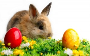 easter bunny wallpaper 10